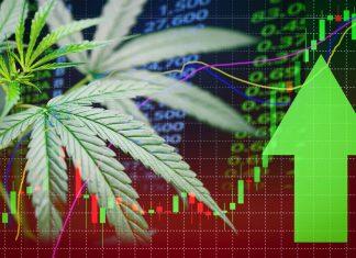 come investire nella cannabis